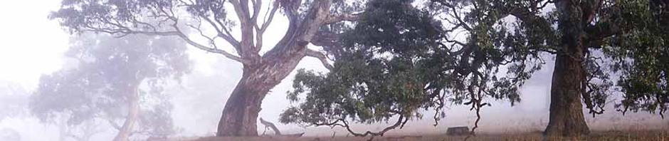 trees-header