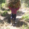 Fodder harvesting, INFRONT photo