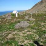 Iceland Landcare