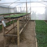 Newly established crop nursery in new hot house November 2013