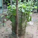 Small home plot bag garden