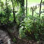 Home garden - small plot