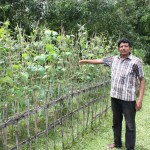 Village elder showing new crops